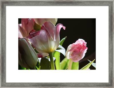 Light And Life Framed Print