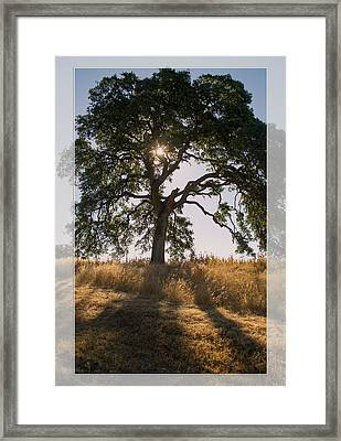 Light And Life Framed Print by Rima Biswas