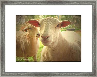 Light And Peace Framed Print by Joyce Dickens