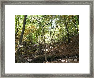Light And Shadow Through The Forest Framed Print