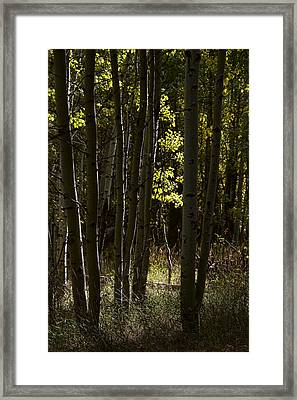 Light And  Shadows D0468 Framed Print by Wes and Dotty Weber