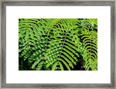 Light And Shadows Framed Print