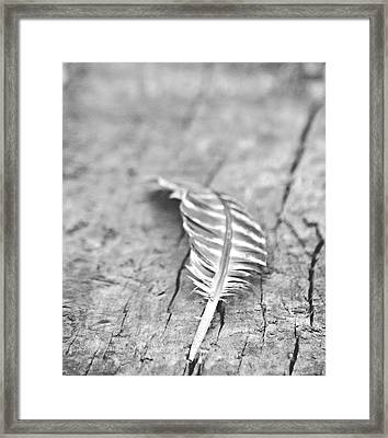 Light As A Feather Framed Print by Chastity Hoff