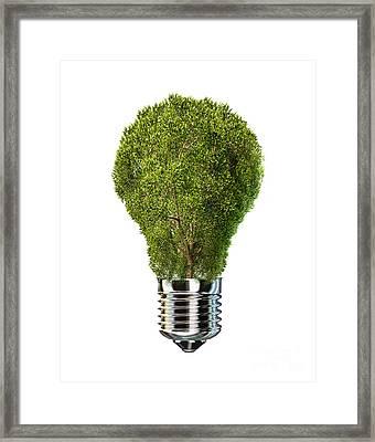 Light Bulb With Tree Inside Glass Framed Print