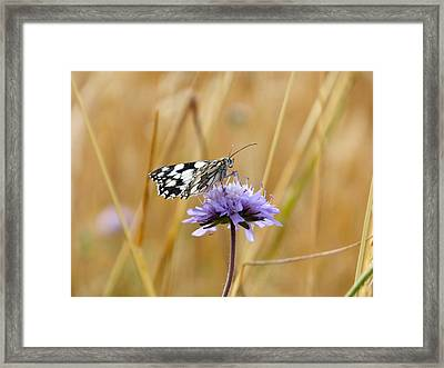 Light Butterfly Framed Print