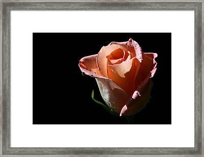 Framed Print featuring the photograph Light Catcher by Doug Norkum