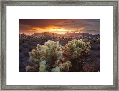 Light Catchers Framed Print by Peter Coskun