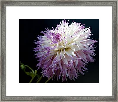 Framed Print featuring the photograph Light Dance by Haleh Mahbod