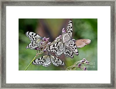 Light Encounter  Framed Print