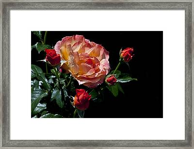 Framed Print featuring the photograph Light Family by Doug Norkum