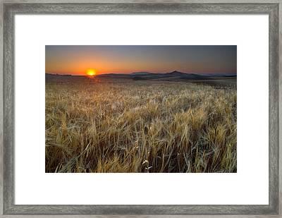 Light Fields Framed Print by Guido Montanes Castillo