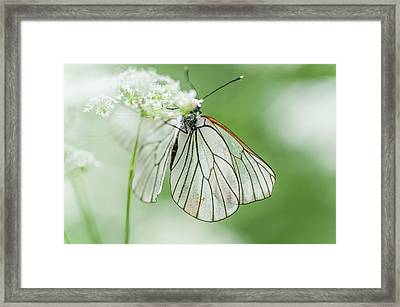 Light Flight 1 Framed Print