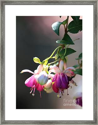 Light From Above Framed Print by Carol Groenen