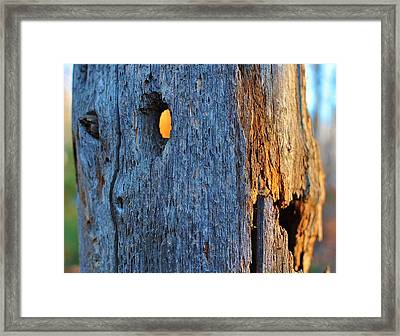 Framed Print featuring the photograph Light From Within by Paul Noble