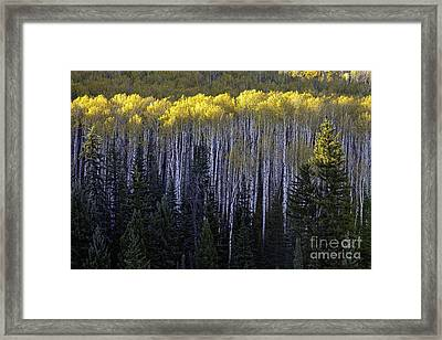 Light In The Canopy Framed Print