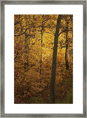 Light In The Forest Framed Print by Jane Eleanor Nicholas