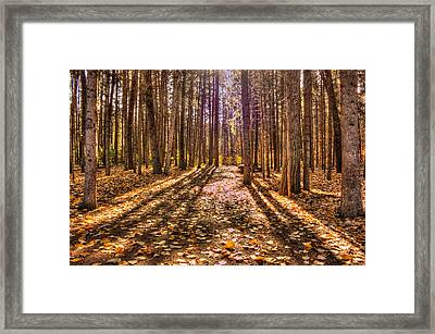 Light In The Forest Framed Print by Jim Sauchyn