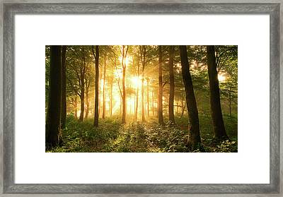 Light In The Forest. Framed Print