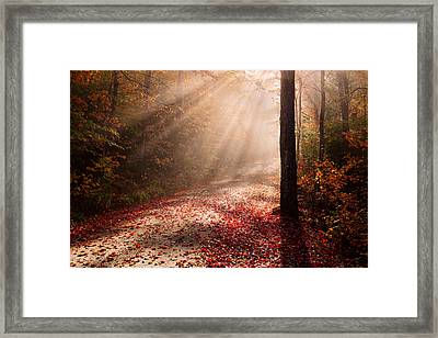 Light In The Forest Framed Print by Michael Blanchette