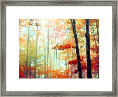 Light In The Forest Framed Print by William Schmid