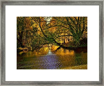 Light In The Trees Framed Print