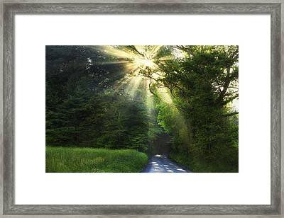 Light In The Woods Framed Print by Andrew Soundarajan