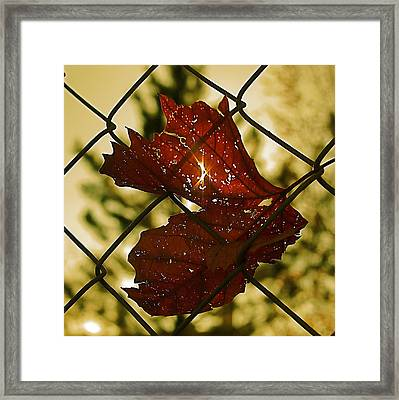 Light Leaf Links Framed Print by Rona Black