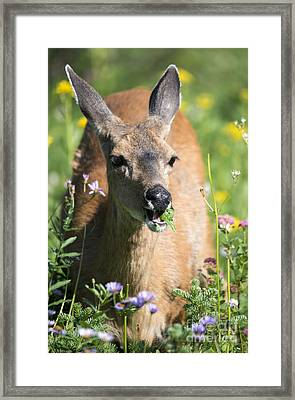 Light Lunch Framed Print