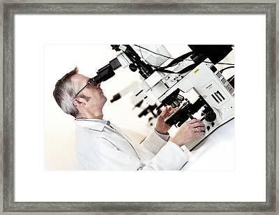 Light Microscopy Framed Print