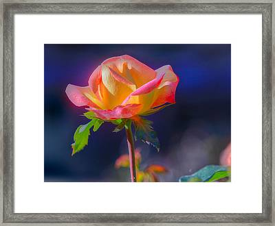 Flower 10 Framed Print