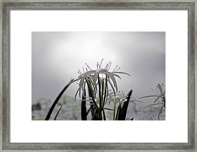 Light Of Darkness Framed Print