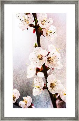 Light Of Spring 1 Framed Print