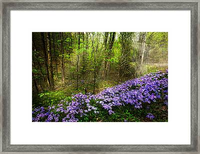 Light Of The Forest Fairies Framed Print by Debra and Dave Vanderlaan