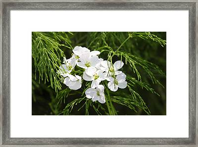 Light Of The White Framed Print