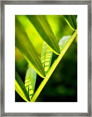 Light On Leaves Framed Print