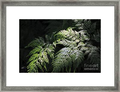 Light On The Fern Framed Print