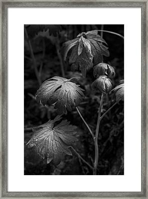 Light On The Leaf Framed Print