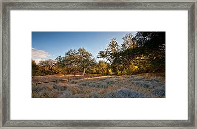 Light On The Pasture Framed Print by Peter Tellone