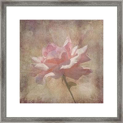 Light Pink Grunge Rose Framed Print by Rosalie Scanlon