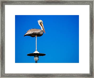 Light Pole Sitta Framed Print by Ronnie Cole