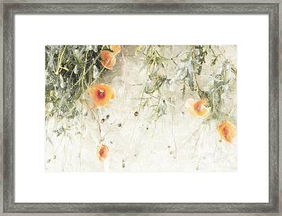 Light Poppies  Framed Print by Scarlet  James