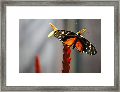 Light Shining Thru Framed Print
