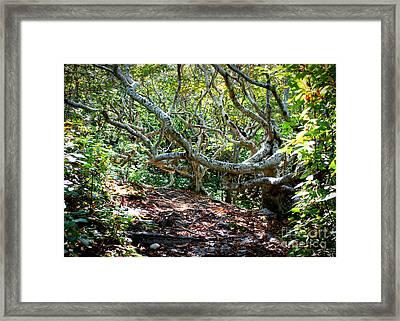 Light Through Martha's Vineyard Trees Framed Print by Carol Groenen