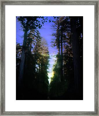 Framed Print featuring the digital art Light Through The Forest by Cathy Anderson