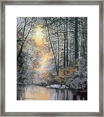 Light Through The Woods Framed Print