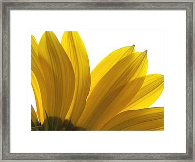 Light Through The Yellow Framed Print by Corinne Elizabeth Cowherd
