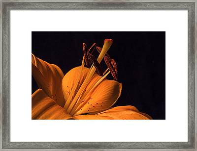 Light Touch Ll Framed Print by Shirley Mitchell