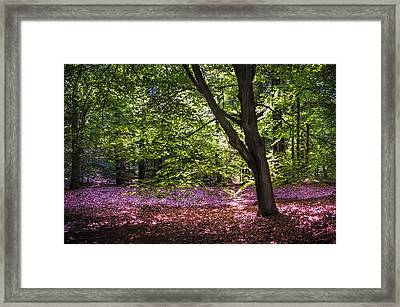 Light Tree In Hoge Veluwe National Park. Netherlands Framed Print by Jenny Rainbow