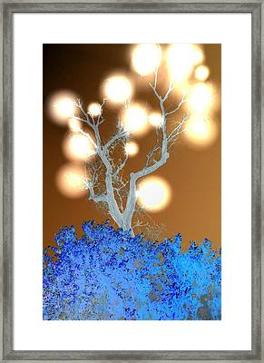 Light Tree Framed Print by Terry Atkins