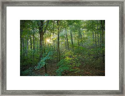 Light Up The Forest Framed Print